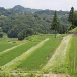 ITを使った徳島県上勝町の「葉っぱビジネス」とは