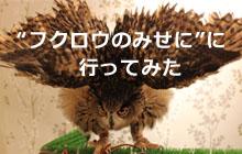 フクロウのみせに行ってみた