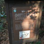 熊野古道の熊野三山滝尻王子にある胎内くぐり