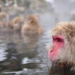 チンパンジーなど猿は白目がない