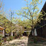 秋津野ガルテンにある自然派食事レストラン「みかん畑」さん